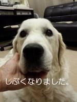 20130908_175759.jpg