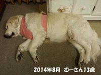 20140811_001326.jpg