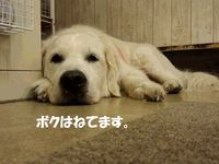 20140813_153041.jpg