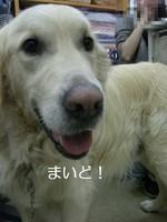 CIMG7198.jpg